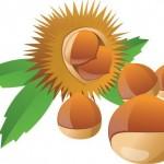 栗の栄養価が素晴らしい!食物繊維が豊富で便秘解消にも!